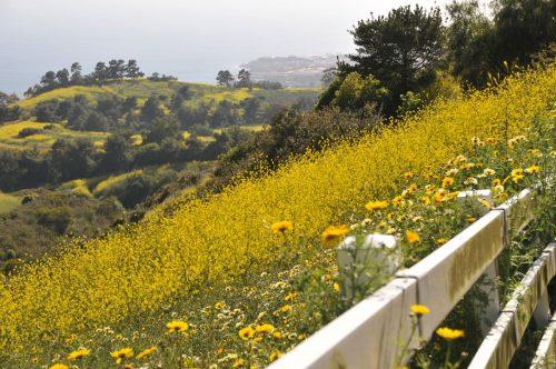 rolling hills ca homes